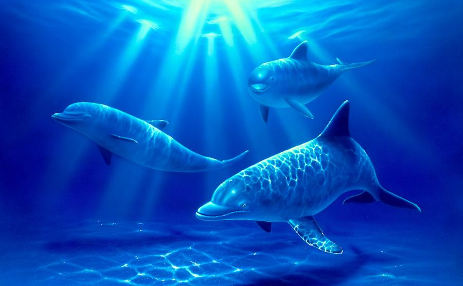 Dolphin Paradise Wall Mural